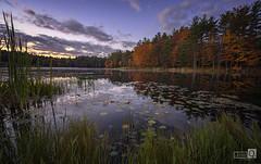 Sunrise in the pond (JoseQ.) Tags: agua laguna lago bow town ciudad paisaje vegetacion autum otoño arboles colores hojas nenufar sunrise amanecer sol sun pond charca mañana newhampshire cielo sky nubes
