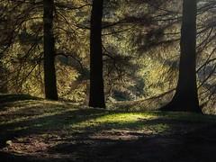 Light and shade (HonleyA) Tags: woodland sun shade fujifilm xpro2 xf35mmf2