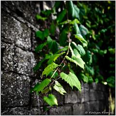 DSF0657.jpg (DrOpMaN®) Tags: lenstagger xe2 landscape korhankumral on1effects captureoneexpress lightroomclassic samyang outdoor m43turkiye samyang12mmf2 fujifilm flowersplants