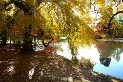 Sussex Autumn  Trees (Adam Swaine) Tags: trees lakes sheffieldpark autumn autumncolours autumnviews naturelovers nature nationaltrust sussex sussexgardens england english britain british seasons uk ukcounties adamswaine 2019 fourseasons greatbritain