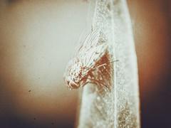 F squared (J.C. Moyer) Tags: vleugels wings kunst art rustic natuur nature blad leaf hfs45150 dmcgx80 lumix panasonic holland thenetherlands volendam edam insect vlieg fly