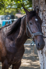 Horse waiting for his owner under a tree
