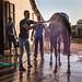 Erschöpftes Rennpferd wird gewaschen. Wassertropfen fliegen überall