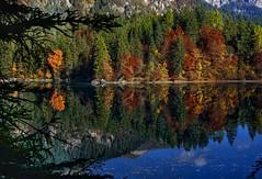 Autunno (giannipiras555) Tags: autunno lago riflessi tovel trentino italia alberi colori natura foliage panorama landscape nikon montagne dolomiti brenta foglie