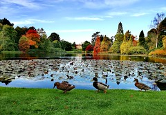 Sheffield Park, Uckfield (lozpage39) Tags: nationaltrust sheffieldpark sussex autumn colours nature lake trees ducks