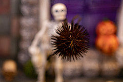 Flowers for You... the Prequel 🎃 (Dotsy McCurly) Tags: halloween dead flowers coneflower skeleton pumpkin macro canoneos80d efs35mmf28macroisstm toyphotography