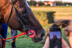 Horse being photographed with a phone up close