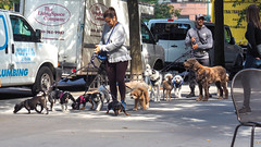 7110-13 Dogs and 2 Walkers (Eclectic Jack) Tags: york big apple september 2019 new city vacation weather good street candid people man woman