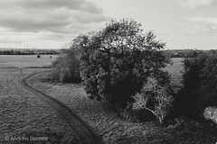 Holm Mead (velodenz) Tags: velodenz fujifilmx100f acros landscape holmmead countryside outside outdoors dehors nature 1000views 1000 views
