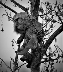 Old Spooky Toys (Dave Russell (1.5 million views thanks)) Tags: stuffed toy bear hanging tree spooky haloween bw black white blackandwhite mono monochrome photo photography photograph canon eos eos7d 7d outdoor eas mor kildonan isle island arran clyde west western scotland ecosse branches branch autumn 2019