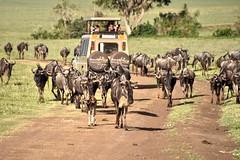 Ngorongoro (Enrica F) Tags: ngorongoro tanzania áfrica nikon safari nature wildlife