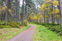 Forest Path (eric robb niven) Tags: ericrobbniven scotland cycling dundee tentsmuir fife landscape trees springwatch