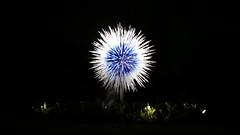 chihuly dandelion (polkadotsoph) Tags: chihuly glass dandelion kew night