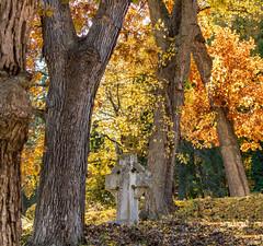 In Woodlawn Cemetery (mahar15) Tags: autumnfoliage trees october fallcolors landscape winonaminnesota nature fallleaves headstone outdoors autumn autumncolor fall cemetery minnesota