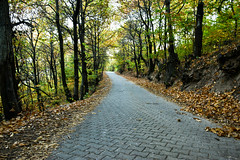 autumn road to heaven (mickraven1) Tags: autumn road leafs dslr lens green yellow path heaven kale macedonia