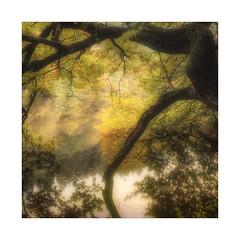 A Foot in Autumn (gerainte1) Tags: autumn leaves trees colour film velvia50 hasselblad501