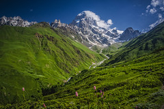 Mount Ushba, Caucasus (Wim van de Meerendonk, loving nature) Tags: svanetiregion mountushba caucasus blue bright color colors colours colour cloud clouds flower green glacier icefield landscape mountain mountainscape nature outdoors outdoor panorama rock rocks sony sky sun scenic snow valley wimvandem georgia astoundingimage