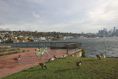 Gas Works Bike Share (Seattle Department of Transportation) Tags: seattle department transportation sdot bike bikeshare gasworkspark geese downtown skyline water lime nikiseligman