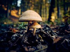 RM-2019-365-298 (markus.rohrbach) Tags: natur pflanze pilz landschaft wald blatt projekt365