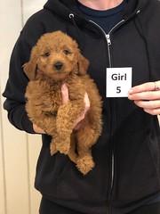 Ginger Girl 5 pic 2 10-25