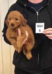 Ginger Girl 5 10-25
