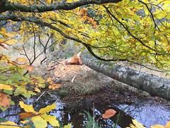 Photo of Beavers ...