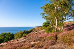 Bornholm, Heathland near Vang (Rainer Fritz) Tags: heide bornholm natur heathland