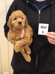 Ginger Girl 1 pic 3 10-25