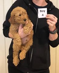 Ginger Boy 4 10-25
