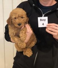 Ginger Boy 4 pic 4 10-25
