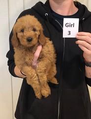 Ginger Girl 3 pic 4 10-25