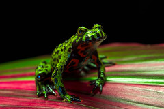 (Christian Sanchez Photography) Tags: birds macrophotography macrofrog macro macrophoto mammals mammal monkey frog floridabirds frogwater wildanimal wildlife waterbirds wildshake animal africa aves