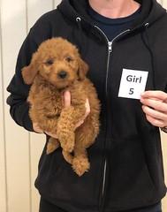 Ginger Girl 5 pic 4 10-25