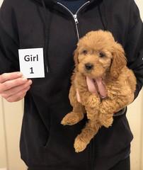 Ginger Girl 1 pic 4 10-25