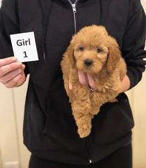 Ginger GIrl 1 pic 2 10-25