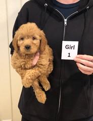 Ginger Girl 1 10-25