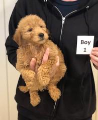 Ginger Boy 1 pic 3 10-25