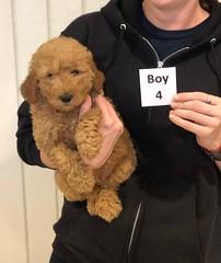 Ginger Boy 4 pic 2 10-25