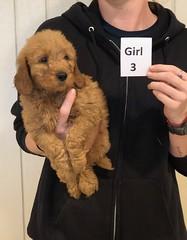 Ginger Girl 3 pic 3 10-25
