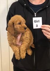 Ginger Girl 3 10-25