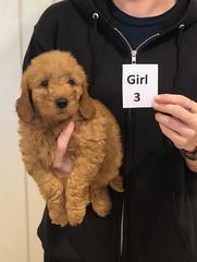Ginger Girl 3 pic 2 10-25