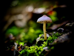a tiny life in the forest (slowhand7530) Tags: olympus omd em1 cosina nokton 25mm f095 m43 fungi