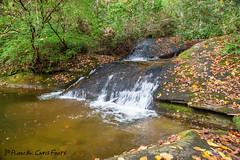 Lower Rockhouse Creek Falls (ChrisF_2011) Tags: rockhousecreekfalls fr475 waterfall pisgahnationalforest rockhousecreek northcarolina leaves fallcolors falls water scenic trout nature