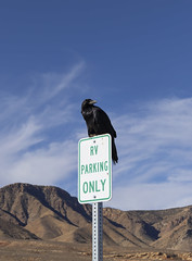 Crow RV Parking (Constantine L.) Tags: crow bird arizona road sign black large parking rv only sky clods blue mountain