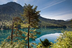 Alpsee with Pines (aivar.mikko) Tags: pines alpseelake lake alpsee see germany alps bavarianalps bavaria bavarian fussen hohenschwangau village landscape mountains scenicview mountain landscapesofgermany landscapes scenic view turquoise emerald green coth5