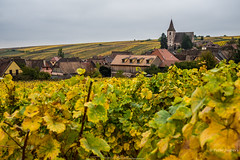 Les vignobles de Hunawihr (Peter Jaspers) Tags: frompeterj© 2019 olympus zuiko omd em10 1240mm28 france french alsace hautrhin grandest hunawihr vignoble vineyard vue view autumn herfst colors church eglise riesling gewurztraminer pinotgris routesdesvins