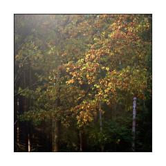 Autumn (sinky 911) Tags: autumn autumnscenes colour forest landscape light newforest nature