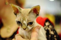 alien (Сonstantine) Tags: alien catslife animals kitten kittens canon photo cat nice
