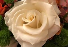 Rose (monique.m.kreutzer) Tags: