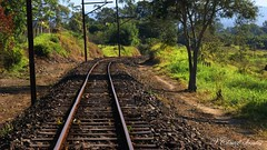 Railroad (VCLS) Tags: vcls valmir valedoparaiba pindamonhangaba brasil brazil train trem railroad ferrovia trilhos rail árvore tree natureza nature
